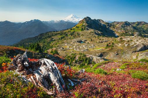 North Cascades National Park「Autum at Tomyhoi Meadows in North Cascade National Park.」:スマホ壁紙(1)