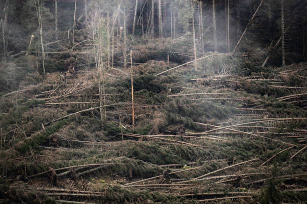 Climate Change: The Asiago Plateau:ニュース(壁紙.com)