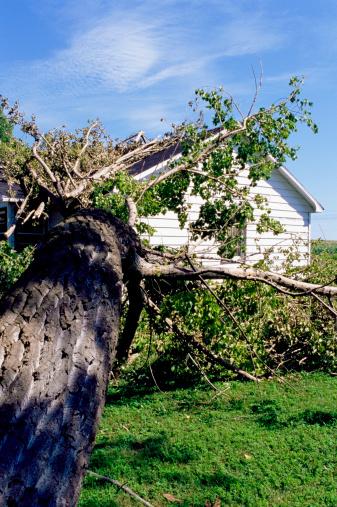 Fallen Tree「Fallen tree on house」:スマホ壁紙(8)