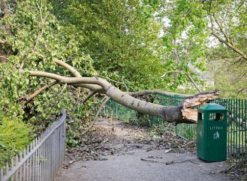 Fallen Tree「Fallen Tree Blocking a Path」:スマホ壁紙(3)