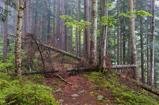 Fallen Tree「Fallen trees in the forest」:スマホ壁紙(11)