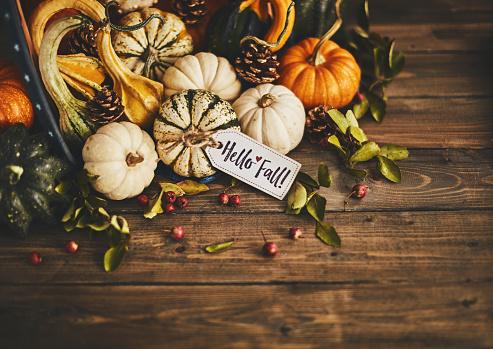 Harvest Festival「Welcoming fall with pumpkin assortment still life and hello fall message」:スマホ壁紙(6)