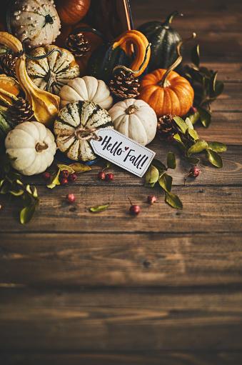Harvest Festival「Welcoming fall with pumpkin assortment still life and hello fall message」:スマホ壁紙(15)