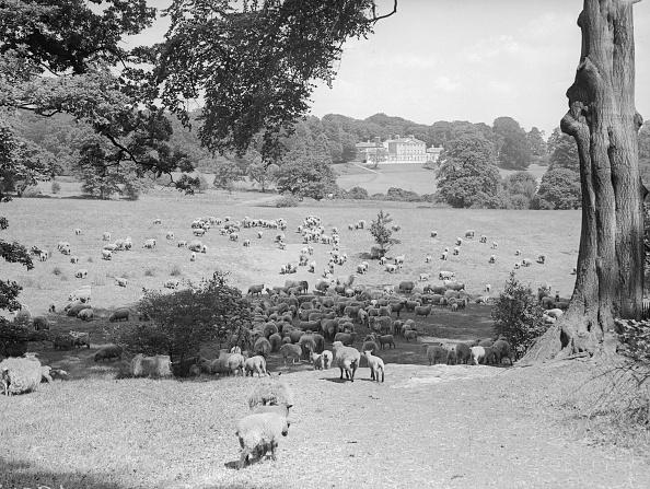 Sheep「Hampstead Sheep」:写真・画像(14)[壁紙.com]