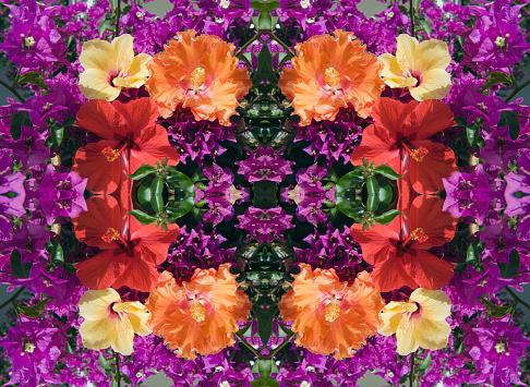 Inflorescence「Kaleidoscope effect of Hibiscus flower on Bougainvillea」:スマホ壁紙(5)