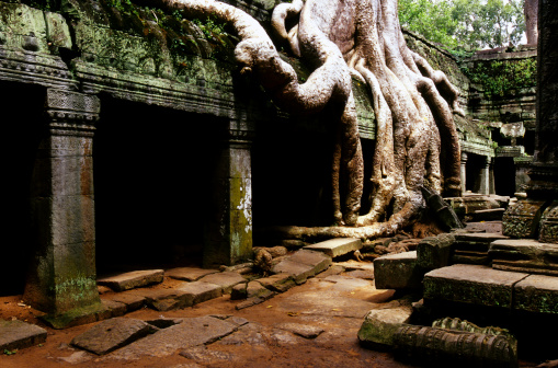 Ancient Civilization「Ta Phrom, Angkor Wat, Cambodia」:スマホ壁紙(15)