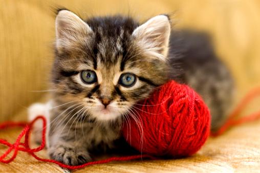 子猫「ウールの恋人」:スマホ壁紙(17)