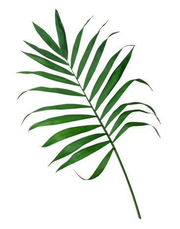 Frond「Palm Frond」:スマホ壁紙(3)