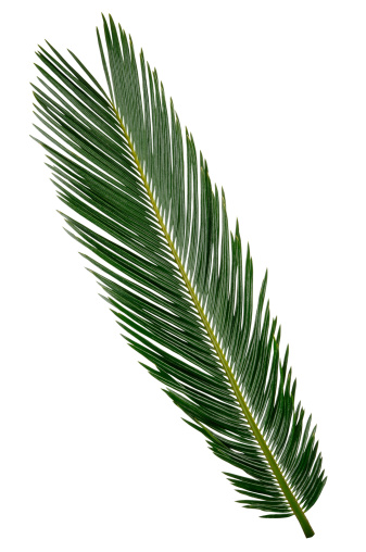Frond「Palm Frond with Path」:スマホ壁紙(0)