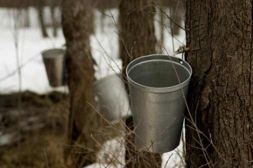 Maple Syrup「Maple sugaring in New England」:スマホ壁紙(2)