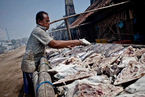 Drying「Fish Smokehouses Produce Popular Semerang Dish」:写真・画像(5)[壁紙.com]