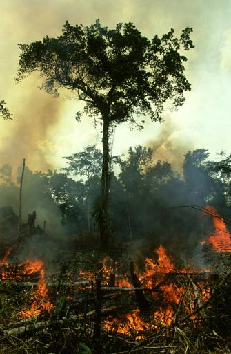 Inferno「Slash and burn, Central African rainforest, near Wamba, Zaire」:スマホ壁紙(13)