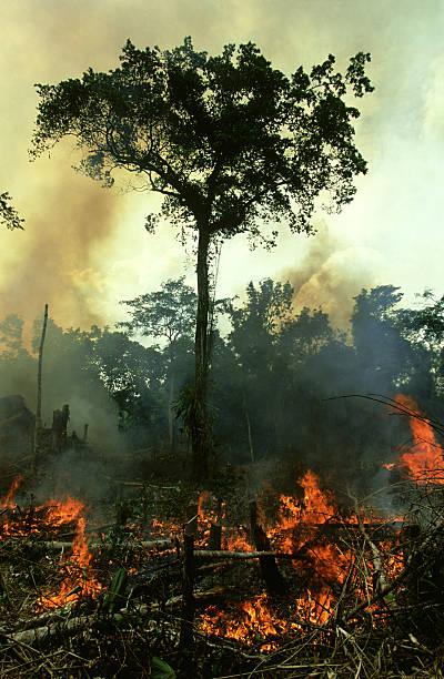 Slash and burn, Central African rainforest, near Wamba, Zaire:スマホ壁紙(壁紙.com)