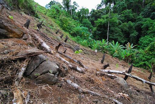 Deforestation「Slash and Burn Agriculture」:スマホ壁紙(2)