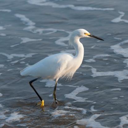 Sayulita「A Bird Wades In The Shallow Water」:スマホ壁紙(0)