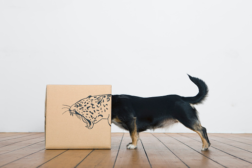 余白「Roaring dog inside a cardboard box painted with a leopard」:スマホ壁紙(0)