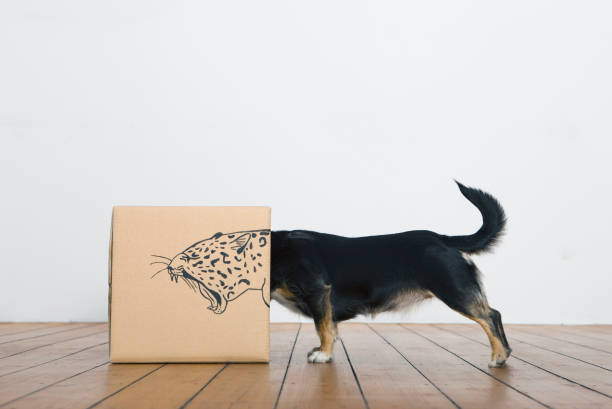 Roaring dog inside a cardboard box painted with a leopard:スマホ壁紙(壁紙.com)