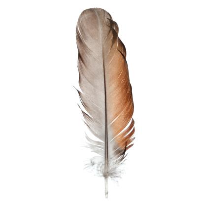 鳥「鳥の羽、白で分離-クローズアップ」:スマホ壁紙(2)