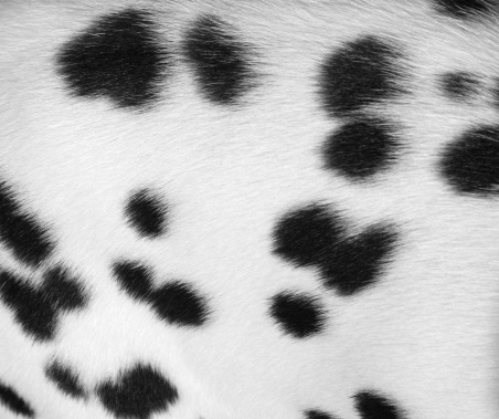 Animal Hair「Dalmatian spotted coat background」:スマホ壁紙(15)