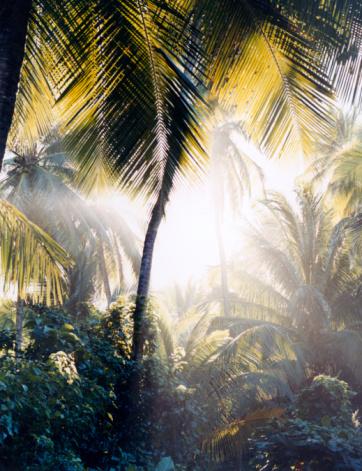 Frond「Sunlight through Palms」:スマホ壁紙(1)