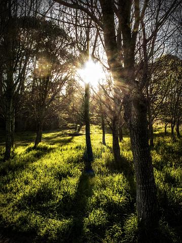 Copse「Sunlight through the trees. Cape Town, South Africa.」:スマホ壁紙(14)