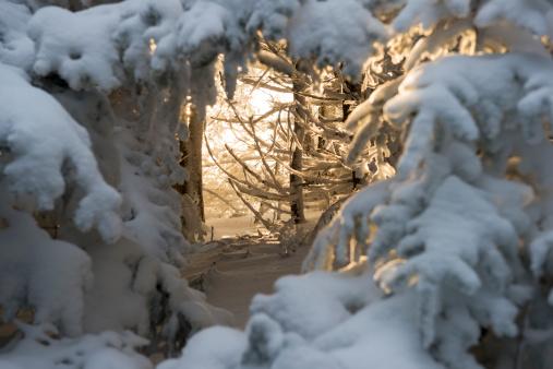 Tennessee「Sunlight through snowy forest on Roan Mountain」:スマホ壁紙(8)