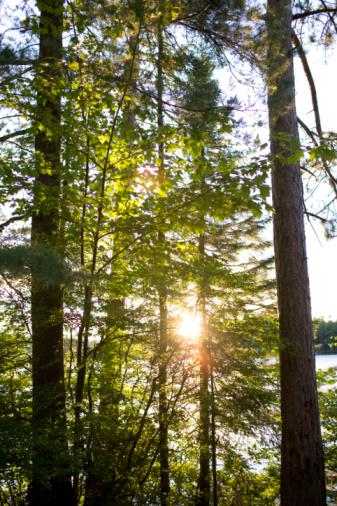 Adirondack Mountains「Sunlight through trees, low angle view」:スマホ壁紙(0)