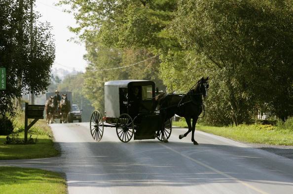 Horse「Six People Killed In Amish School Shooting」:写真・画像(16)[壁紙.com]