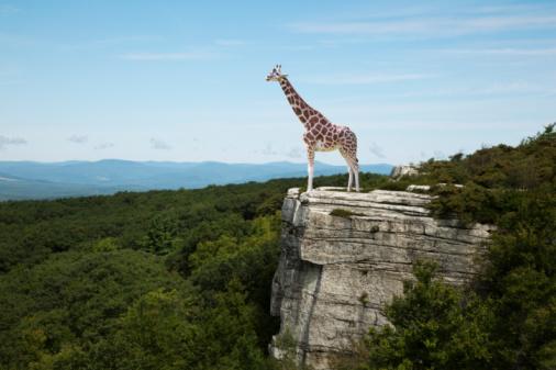 Giraffe「Giraffe on clifftop」:スマホ壁紙(13)