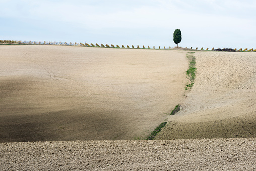 Earth「Italy, Tuscany, San Quirico Dorcia, Lonely cypress tree standing on top of gray Tuscany hill with vineyard rows」:スマホ壁紙(7)