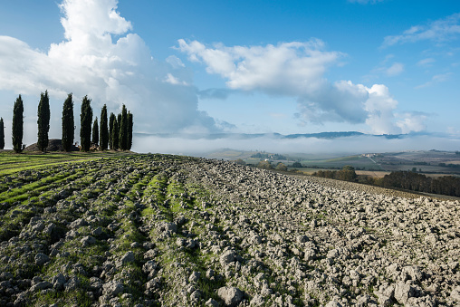 Earth「Italy, Tuscany, San Quirico Dorcia, View of plowed fertile soil and green cypress trees with blue cloudy sky」:スマホ壁紙(13)