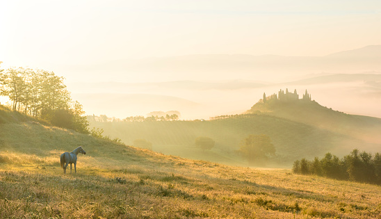 Rolling Landscape「Italy, Tuscany, San Quirico d'Orcia, view to rolling landscape in the morning mist」:スマホ壁紙(1)