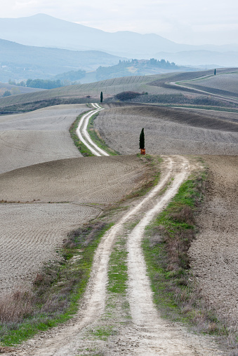 Earth「Italy, Tuscany, San Quirico Dorcia, Long twisting rural road leading through endless gray fields and lonely cypress trees」:スマホ壁紙(8)