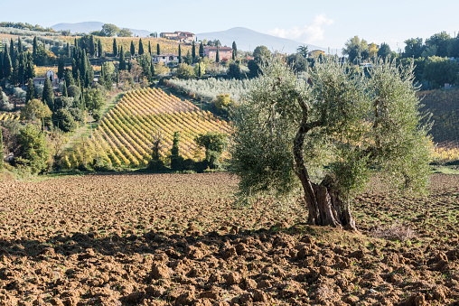 Abbey - Monastery「Italy, Tuscany, Montalcino, Hills and vineyards with Abbey of SantAntimo in distance」:スマホ壁紙(18)