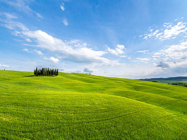 Italy, Tuscany, Cypress trees on hill:スマホ壁紙(壁紙.com)
