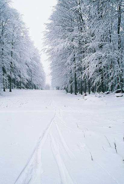 Italy, Tuscany, Amiata Mount, Winter landscape:スマホ壁紙(壁紙.com)