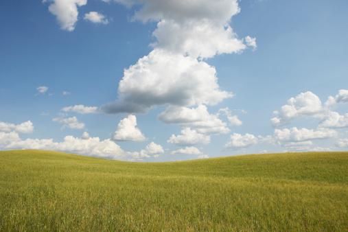 イタリア「Italy, Tuscany, Val d'Orcia, cloudy sky over wheatfield」:スマホ壁紙(6)