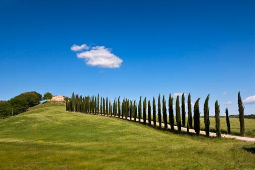 Farm「Italy, Tuscany, Crete, View of farm with cypress trees」:スマホ壁紙(1)