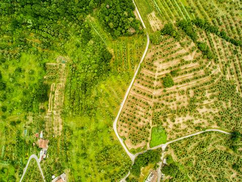 Grove「Italy, Tuscany, Aerial view of Monsummano Terme」:スマホ壁紙(5)