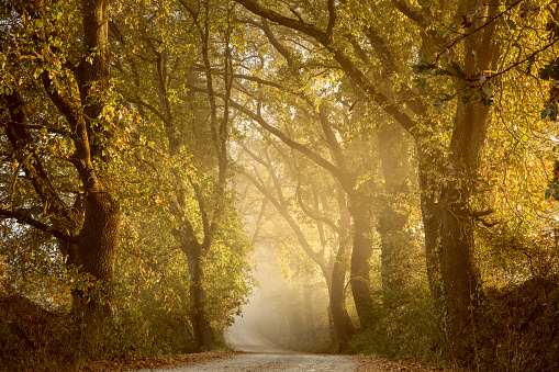 Avenue「Italy, Tuscany, Val d'Orcia, tree-lined road in morning fog」:スマホ壁紙(2)