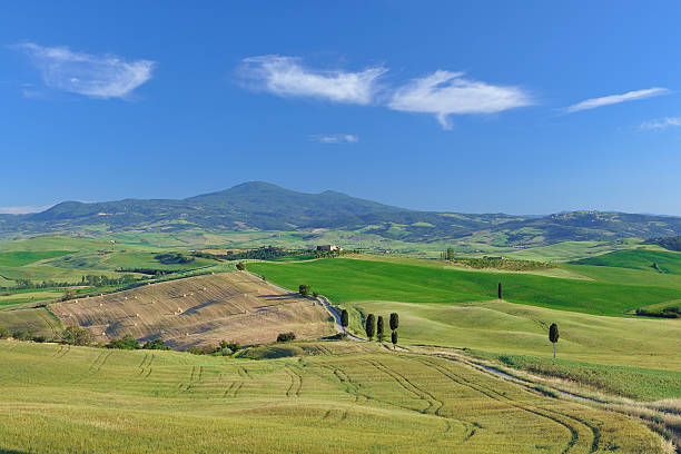 Italy, Tuscany, Province of Siena, Monte Amiata, Val d'Orcia, Pienza, View of cypress trees along dirt road:スマホ壁紙(壁紙.com)