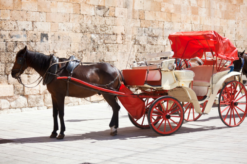 Horse-drawn carriage「パルマ Majorca &キャリッジ馬」:スマホ壁紙(5)