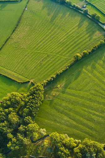 Copse「Aerial abstract, woodland and pasture」:スマホ壁紙(3)