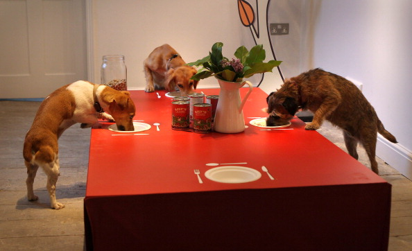 Table「Lily's Kitchen Launch The First Pop-Up Doggy Diner」:写真・画像(1)[壁紙.com]