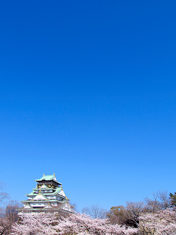 Cherry Blossoms「Osaka castle and cherry blossoms, Osaka Prefecture, Honshu, Japan」:スマホ壁紙(17)