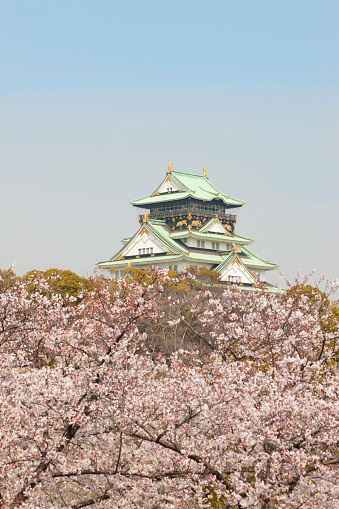 桜「Osaka Castle and Cherry Blossom」:スマホ壁紙(11)