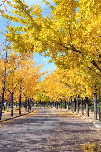 Deciduous tree「Osaka Castle Park in Autumn」:スマホ壁紙(13)