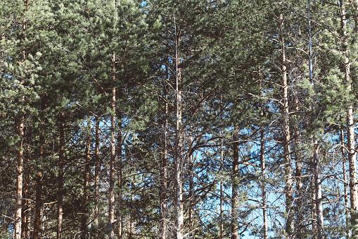 画像加工フィルタ「Forest trees」:スマホ壁紙(9)