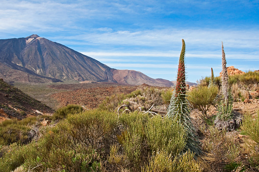 Atlantic Islands「Spain, Canary Islands, Tenerife, Los Roques de Garcia, Mount Teide, Teide National Park, Echium Wildpretii」:スマホ壁紙(11)