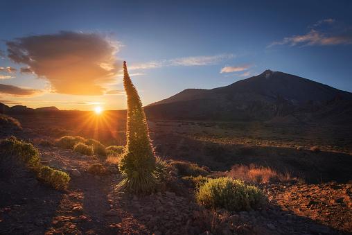 Atlantic Islands「Spain, Canary Islands, Tenerife, Teide National Park at sunset」:スマホ壁紙(1)